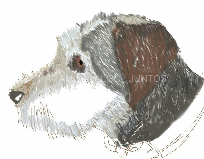 Lucho. Ilustración de mascotas